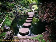 Forest Glade - Japanese gardens