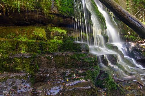 nature waterfall nikon tasmania