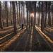 Forest lines by SFB579 :)