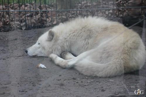 Sonntags Besuch im Zoo Berlin 25.01.2015 31