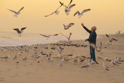 ocean food seagulls beach birds sunrise dawn