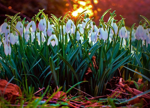 park sunset england london gardens woodland surrey snowdrops bushy paulinuk99999