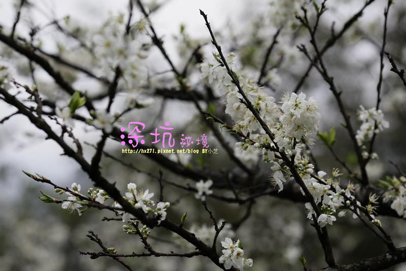IMG_0129_resize
