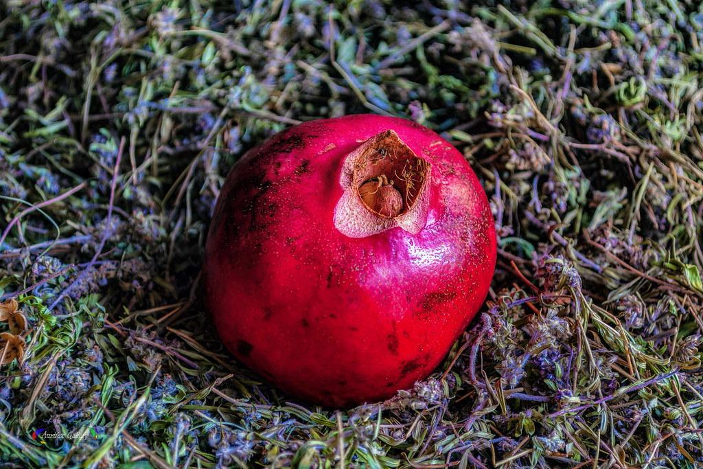 Pomegranate and wild oreganum