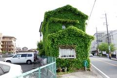 Creeper-clad house