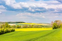 Haute Saône, France - Rapeseed fields