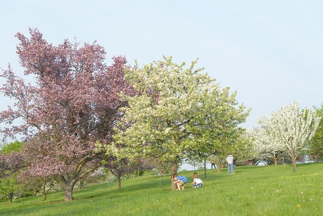CrabApple Arboretum-52