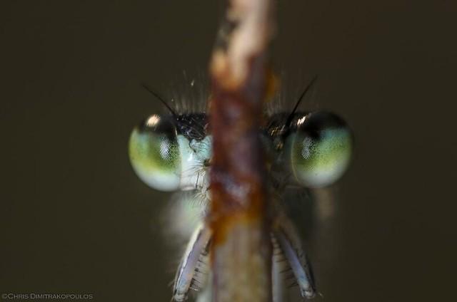 The eyes!