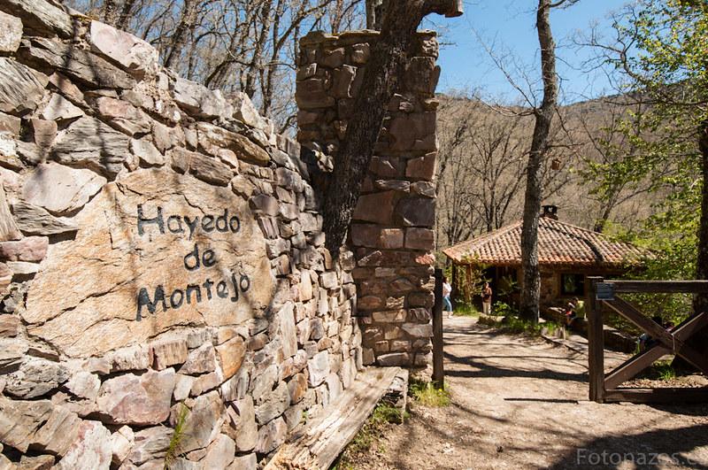 Visita al Hayedo de Montejo en primavera