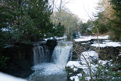 Winter 2013 (Jesmond Dene)  (7)