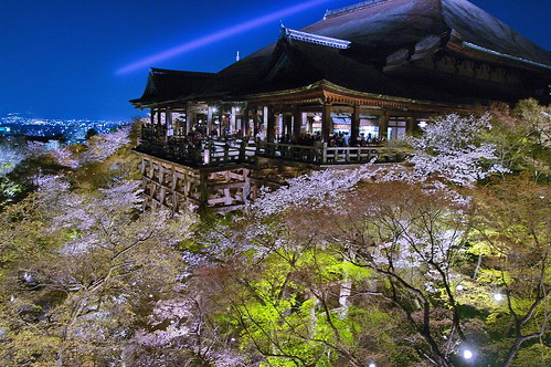 【写真】桜 : 清水寺