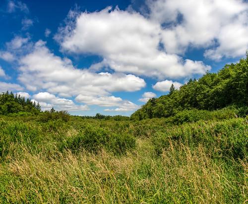 panorama day bc cloudy pano bluesky grasses langley tallgrass fluffyclouds campbellvalleypark nikon18200mmvrii 3exposurepanorama nikond7000 pse11