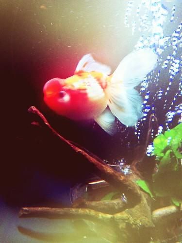 Art aquarium 2013