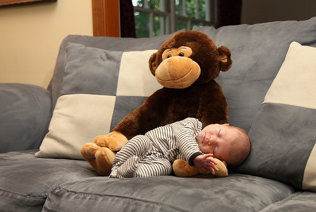 Monkey Taking Care of Griffin