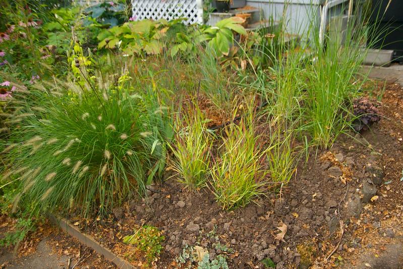 new grass planting  3556
