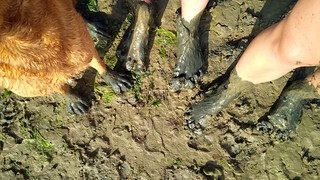 Mucky paws