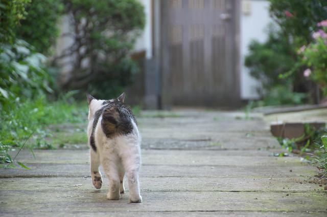 東京路地裏散歩 2013年8月28日