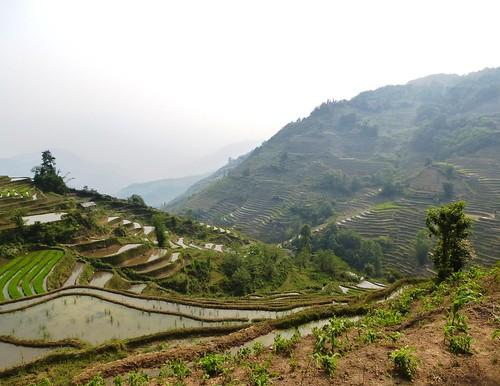 Yunnan13-Yuanyang 21 (1)