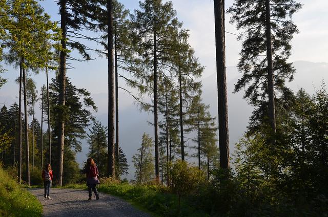 Caminando entre árboles enormes camino de la casa de Heidi