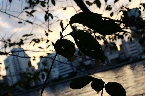 sunset with leaves