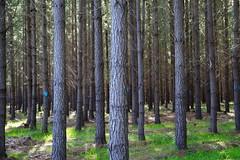 Tree paterns.