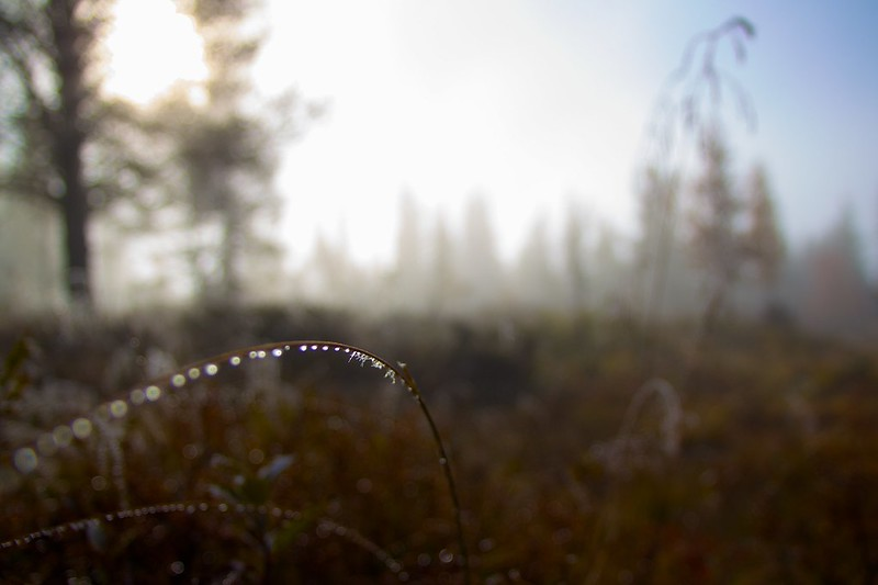 Morning Dew 2