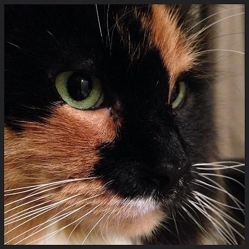 Grisabella #catsofinstagram #nofilter
