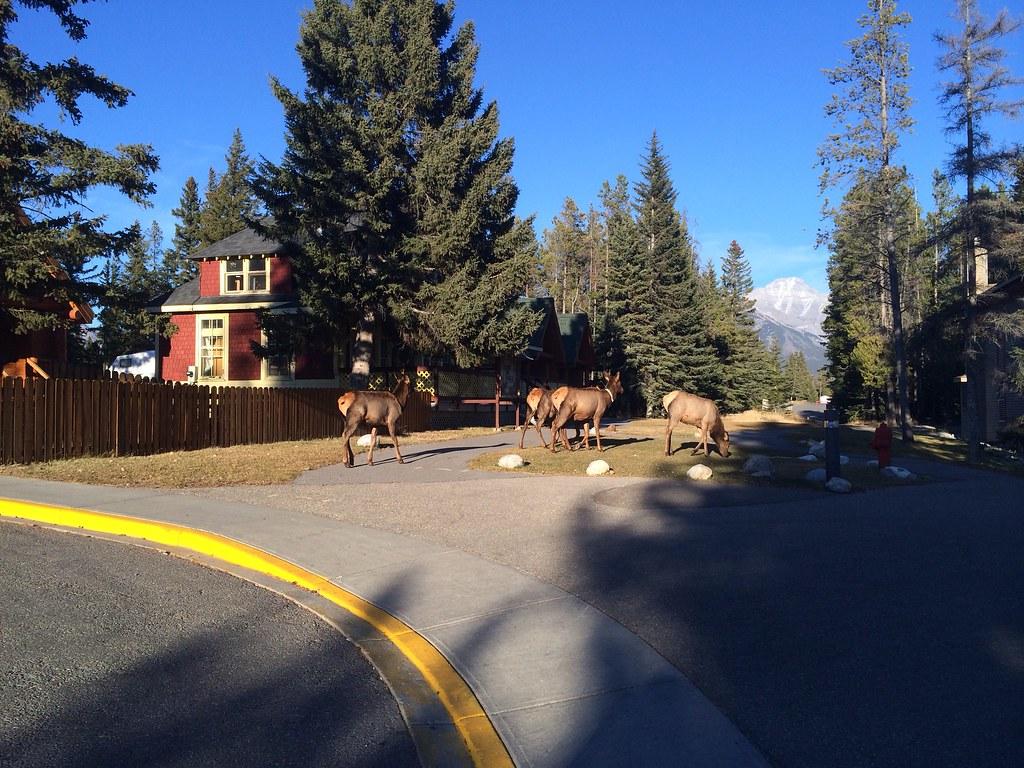 Hirsche direkt vor dem Hostel