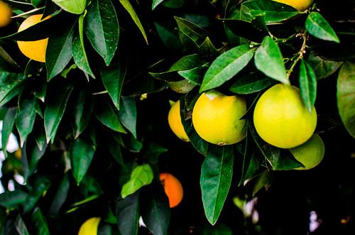 Naranjas 16