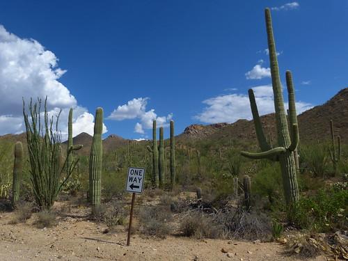Saguaro National Park- Arizona
