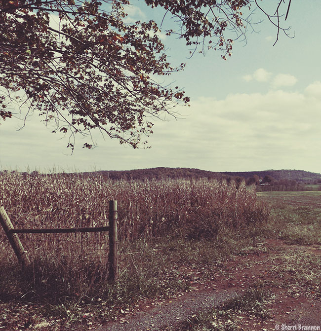 November field