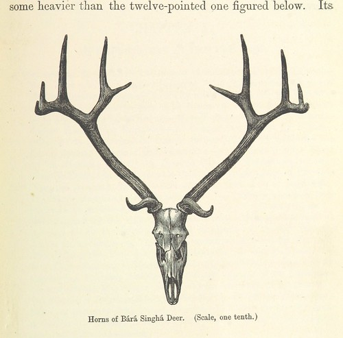 Image taken from page 421 of 'The Highlands of Central India: notes on their forests and wild tribes, natural history, and sports ... With map and illustrations'