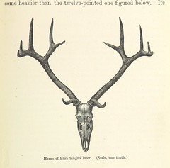 """British Library digitised image from page 421 of """"The Highlands of Central India: notes on their forests and wild tribes, natural history, and sports ... With map and illustrations"""""""