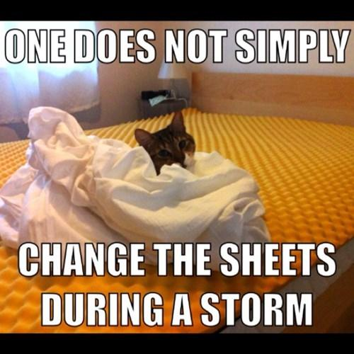 Cat changes sheets