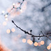 branches and bokeh by meeganz