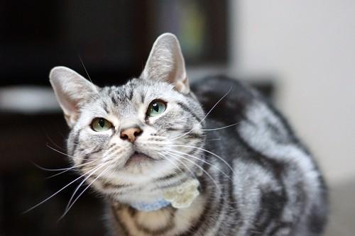 cat #281