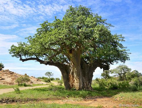 Mapungubwe
