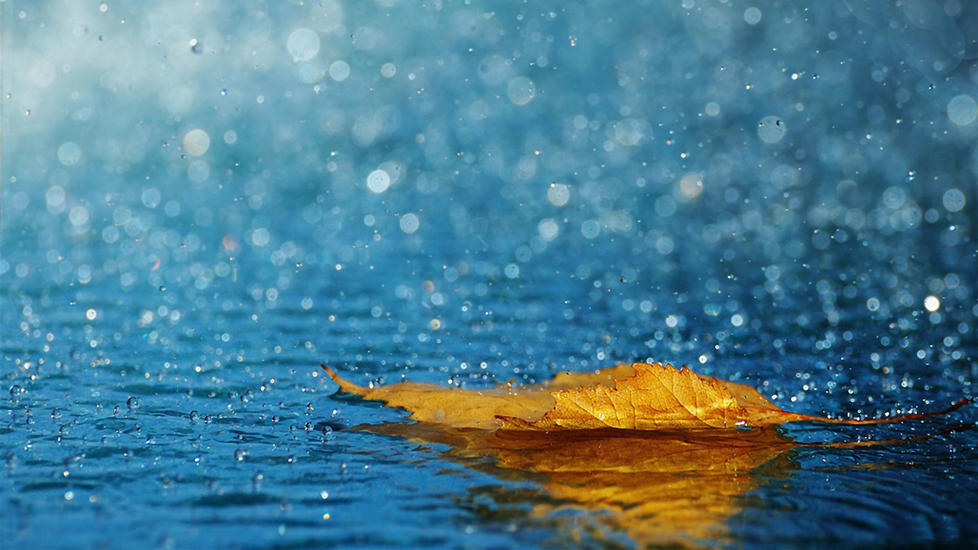 Rain drops in Summer - Top 10 HD Raindrop Wallpapers for Your Desktop