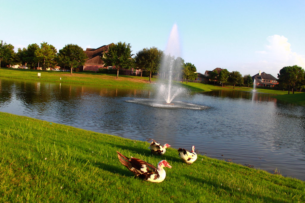 Elevation Of Riverwood Forest At Weston Lakes Tx Usa