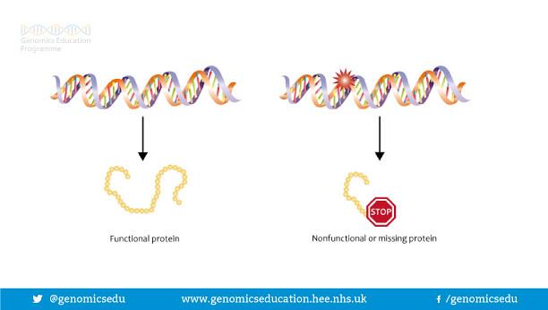 Effect of a mutation
