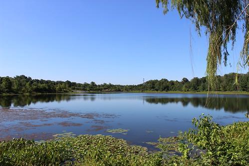 blue trees summer lake green nature water canon maryland greenbelt blueskies algae 4summer 4seasons lakeartemesia waterscene berwynheights canont3i canoneosrebelt3i lakearty