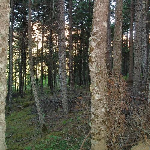 trees green nature forest woods view greece villlage fokida χωριό ελλάδα δέντρα φύση πράσινο θέα δάσοσ φωκιδα artotina αρτοτινα ξυλα