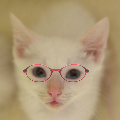 Shrimp_Louie_glasses