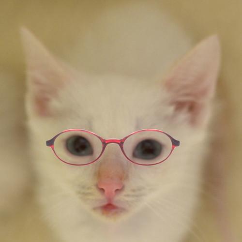 Shrimp_Louie_glasses