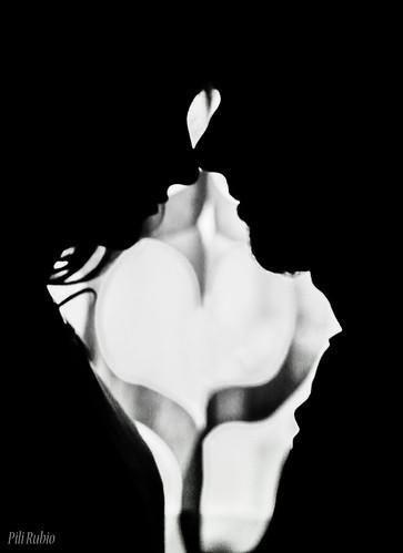 Amor a contraluz_