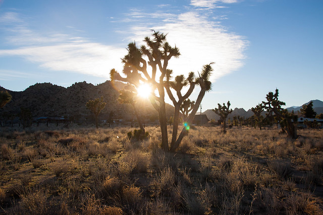 Yucca Valley, CA