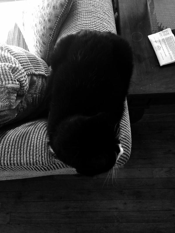Noircat