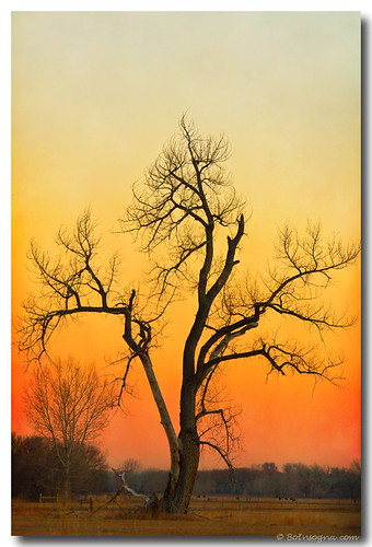 travel trees winter sky orange tree nature season landscape scenery colorado view artgallery dusk scenic sunsets sunrises cottonwoodtree bouldercounty jamesboinsogna