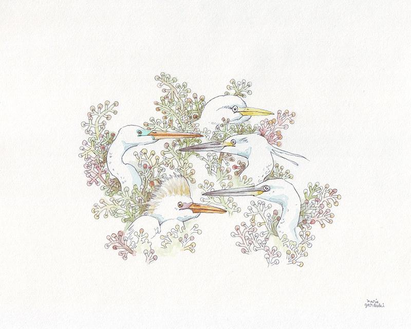 Eager Egrets