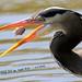 WBY2480-16 7D2-100  Heron lining fish up